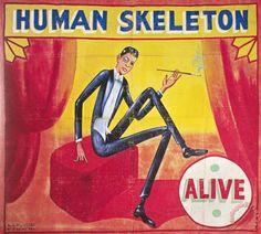 human skel